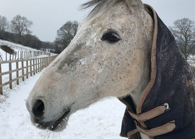 Horse in winter, snow paddock