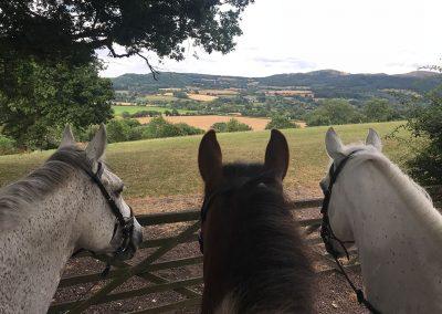 Three horses, Malvern