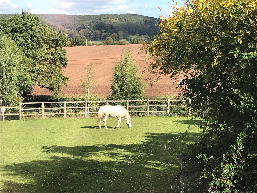 Horse in paddock